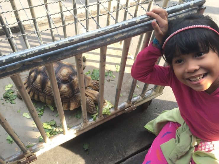 Little Baby Z and the tortoise