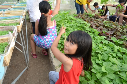 Kids were taught how to plant and harvest these spinach