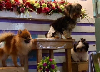 Pet Lovers Cafe dogs_SAHMotsari
