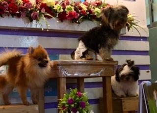 Pet Lovers Cafe dogs_SAHMotsari