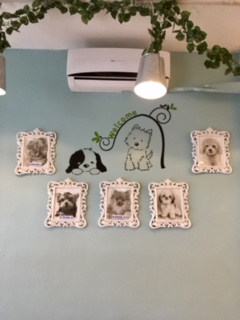 Pet Lovers Cafe_featured pets_SAHMotsari